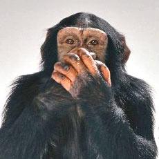 bad bad monkey